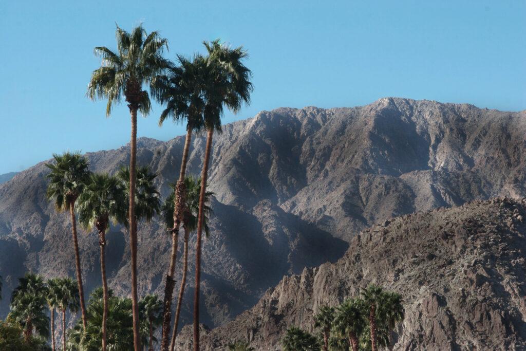 Palmeras en el desierto de Palm Springs