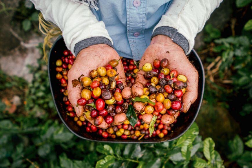 aventurero café colombiano REI.
