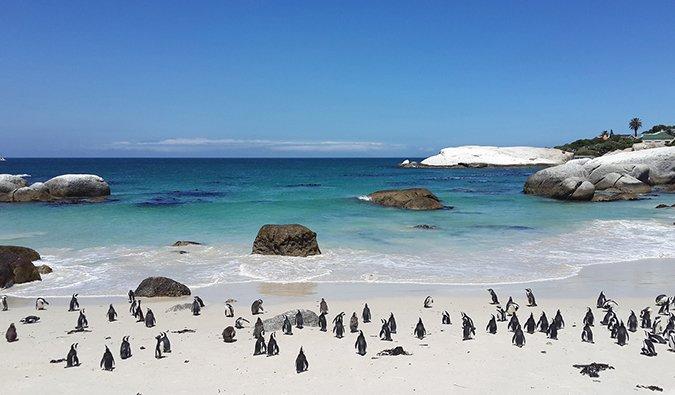 Pingüinos en Boulders Beach, a las afueras de Ciudad del Cabo