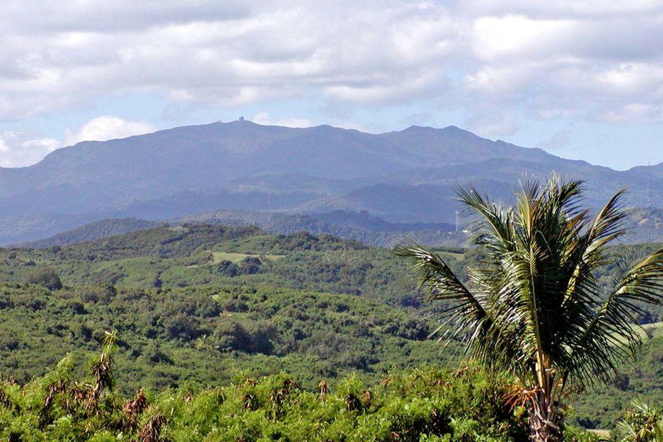 Recorrido por el bosque lluvioso El Iunkue