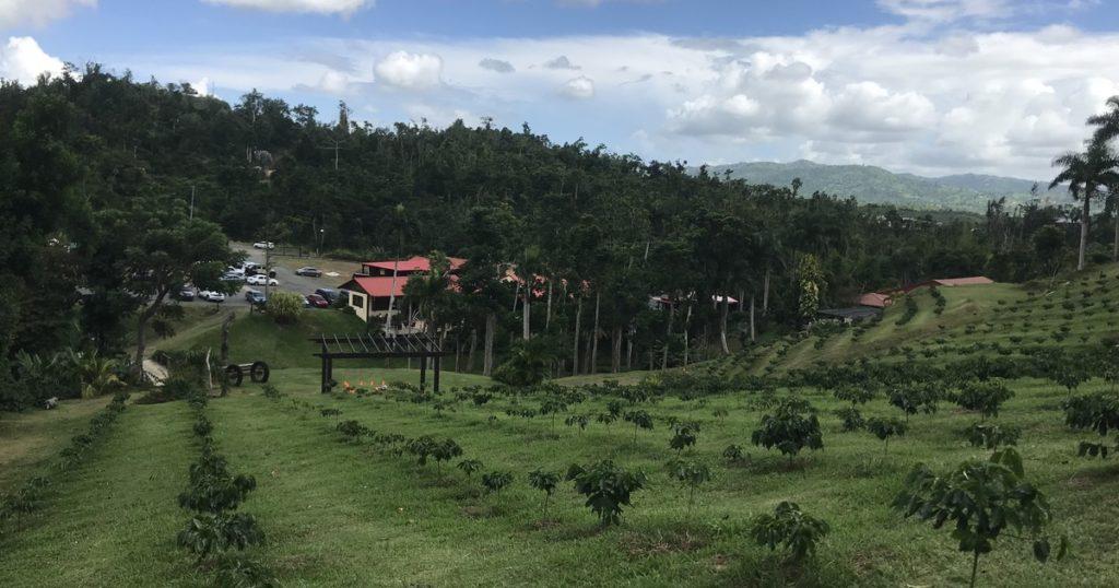 San Juan: Recorrido gastronómico rural con selva tropical de Carite