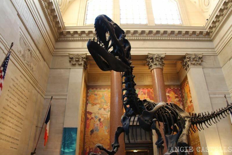 Museos b & # 39; cargo WiFi gratuito en Nueva York: el Museo de Historia Natural