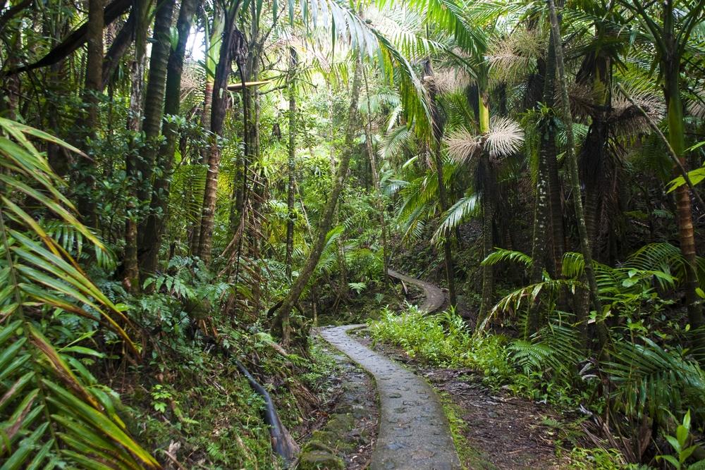 Selva tropical El Iunkue