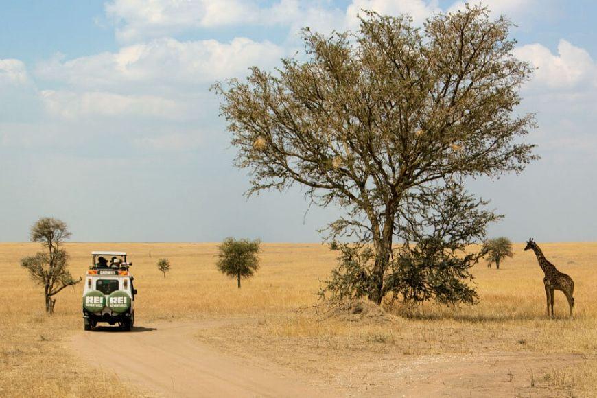 REI Tanzania gira por África.