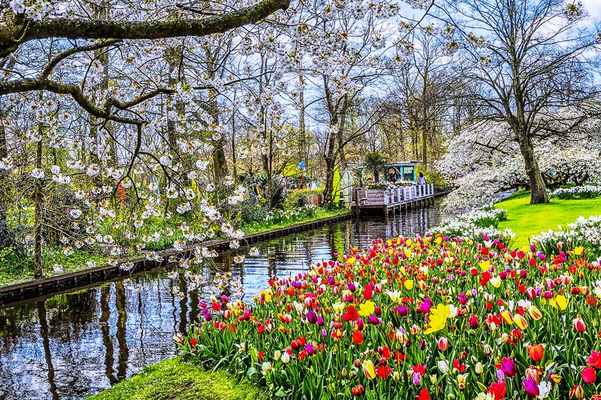 Parque de flores y tulipanes Keukenhof en los Países Bajos.