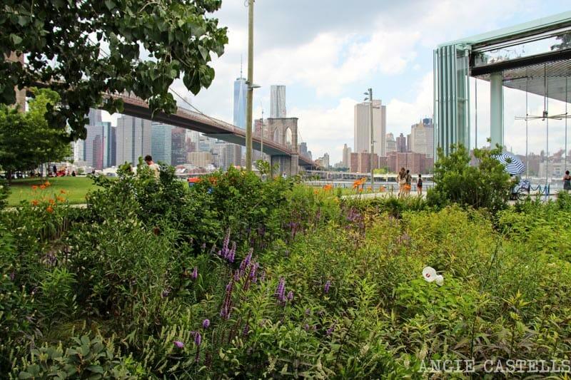 insectos que viajan de Nueva York Brooklyn Bridge Park 1
