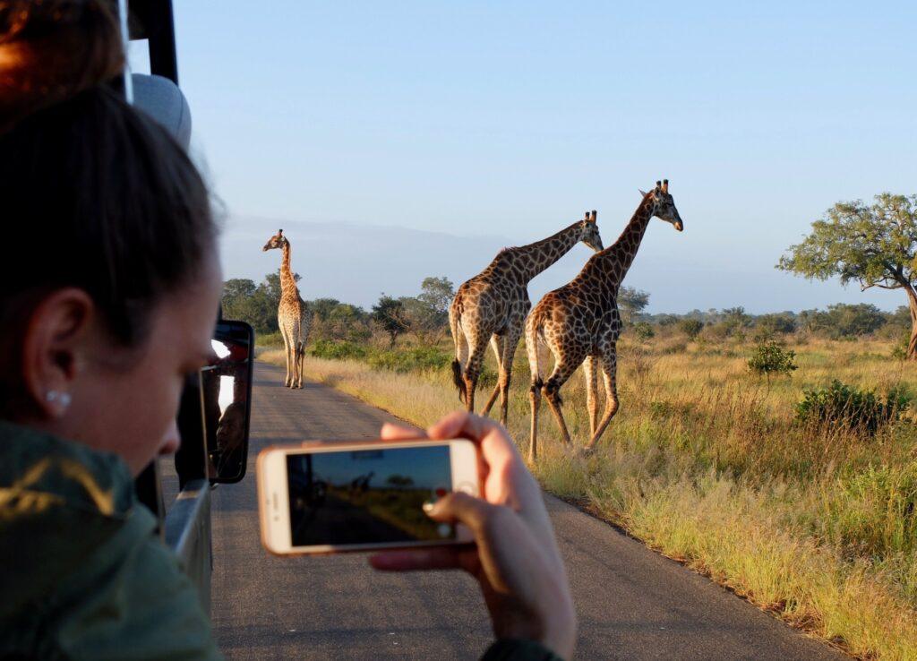 mujer fotografiando una jirafa desde un vehículo de safari.